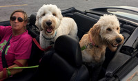 Florida couple knew goldendoodle would be a ???perfect fit for us???