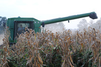 Field work - Farmers seeing yields twice as large as last year???s