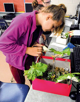 STEM activities designed to engage Medora students in summer