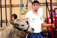 Showing off: Supreme showmen events challenge 4-H'ers' knowledge, endurance, adaptability