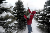 Farm offers variety of you-pick Christmas evergreens