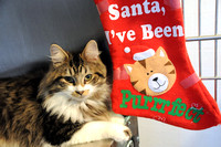 Humane Society slates annual holiday open house, fundraiser
