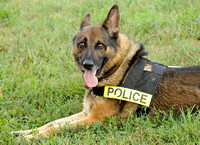 Police dog retires from force due to health conditions